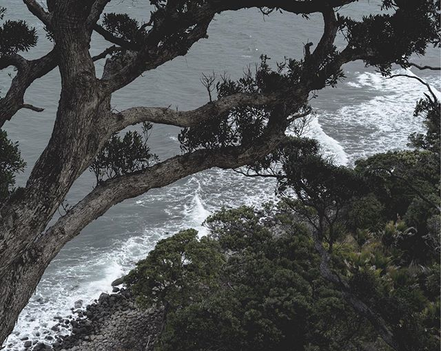 Never mind the Ladder, climb a tree instead 📈🌳 • • • • • #trees #treesofinstagram #coastline #seaside #coromandelpeninsula #wavey #moodyocean #moodygrams #nzmade #justgoshoot #landscaper #discover_newzealand