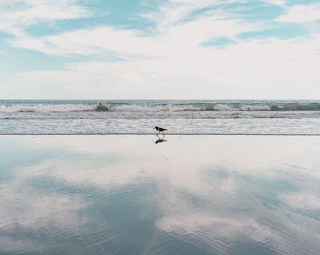 Two birds with one stone 🦆 • • • • • #birdshots #birdsofinstagram #lifesabeach  #gameoftones #outdoortones #creativeoptic #reflection_shotz #reflectionperfection  #Sony #sonyalpha #nzmade #auckland #nz @unumdesign #unumfam #capturenz #lanscapecaptures #purenewzealand #splendid_earth #wanderlust #westcoast #weroamnewzealand #ig_landscape
