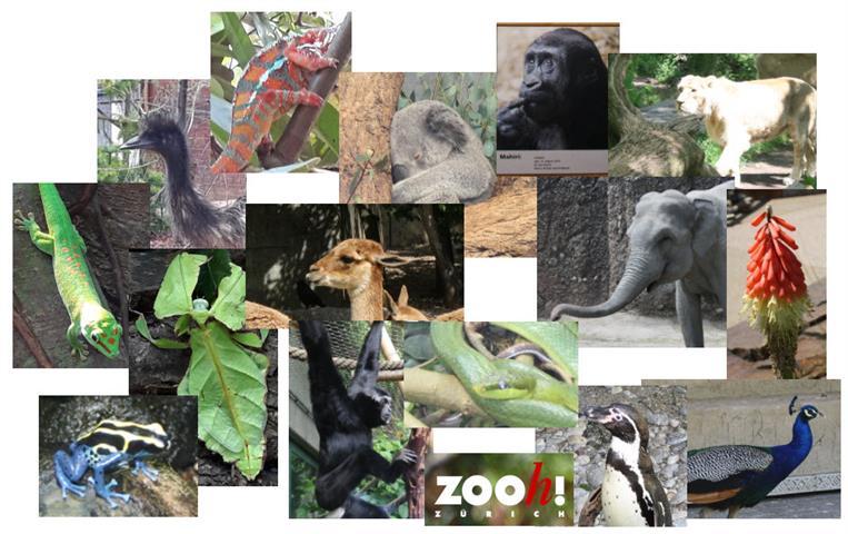 THH_2019-06-17 Zoo Zürich , FIFA Zürich - 01_1.jpg