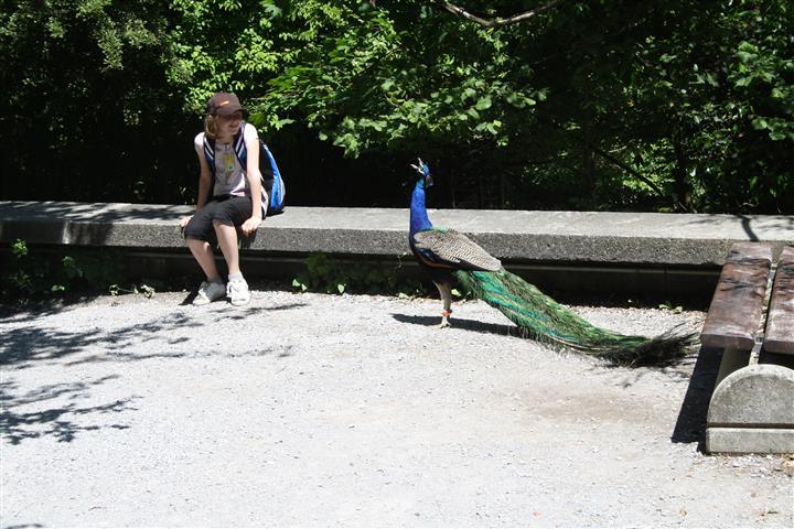 THH_2019-06-17 Zoo Zürich , FIFA Zürich - 15.JPG