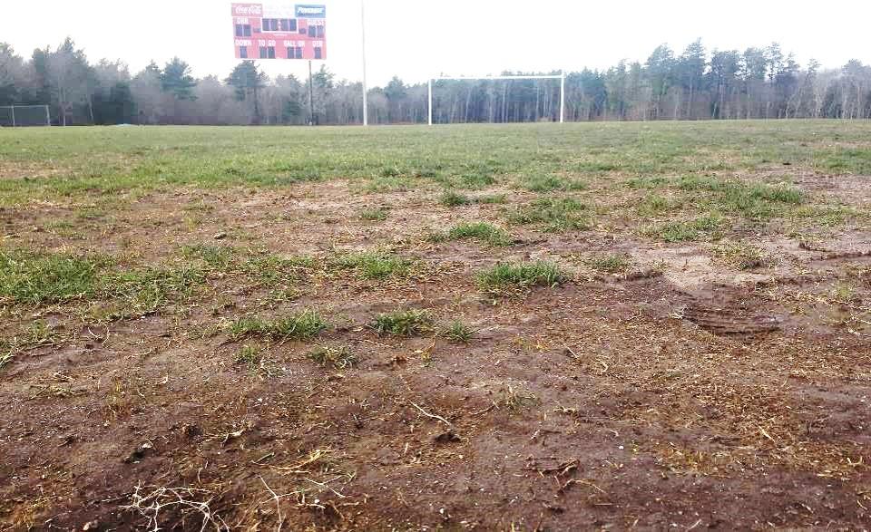 Main field pic2.jpg