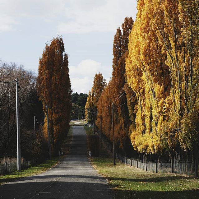 Gold avenues...