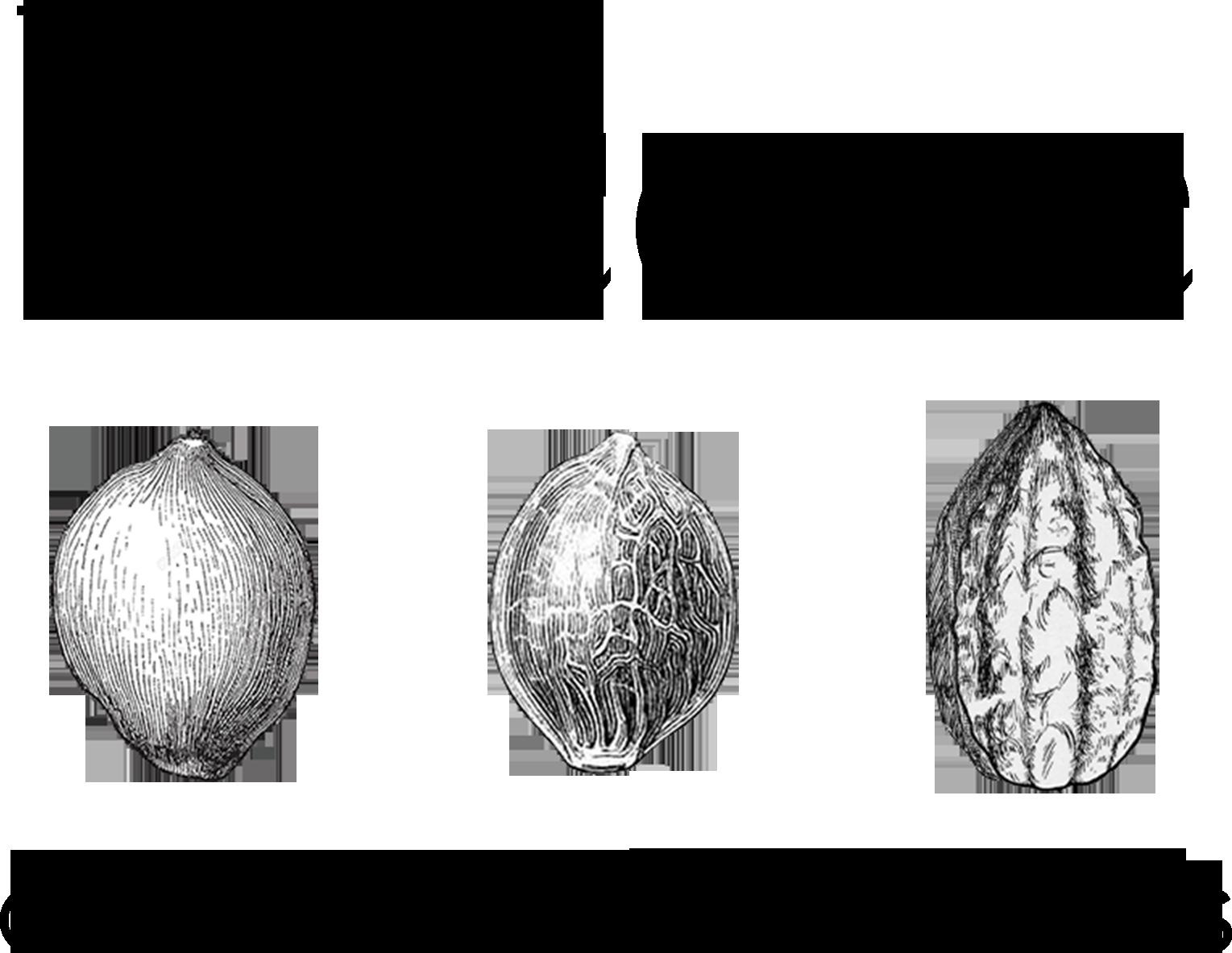 Baceae_Logo.png
