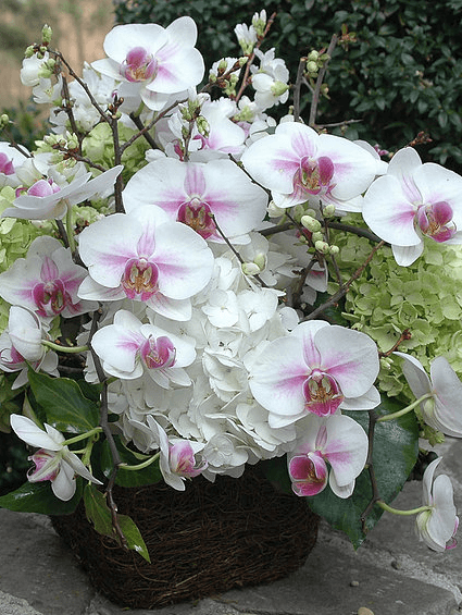 floral-delivery-atlanta-16.png