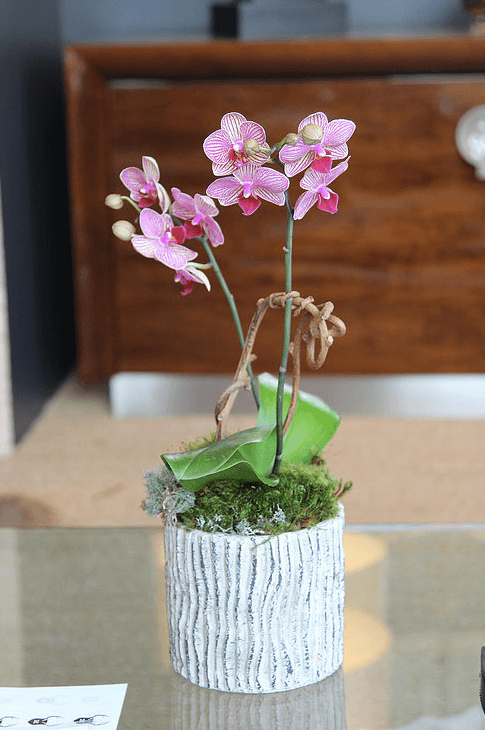 orchid-delivery-atlanta-3.png