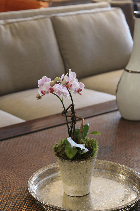 orchid-delivery-atlanta-4.png