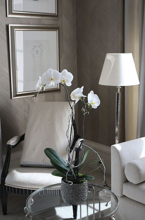 orchid-delivery-atlanta-7.png