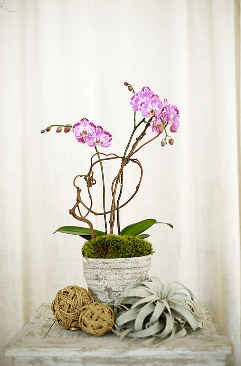 orchid-delivery-atlanta-8.png