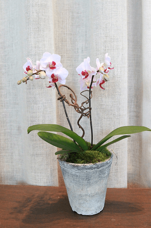 orchid-delivery-atlanta-10.png