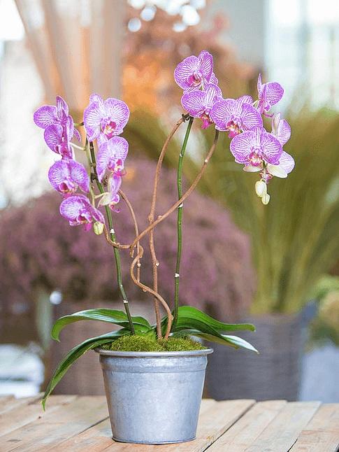 orchid-delivery-atlanta-6.jpg