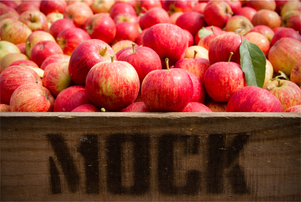 Certified Bio-Dynamic Apples from Mock Orchard in Red Hill, Vic (Mornington Peninsular)
