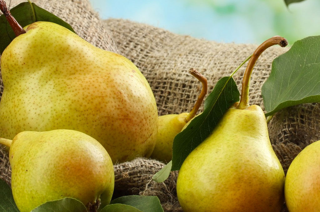 Certified Bio-Dynamic Pears from Greenwood Orchard in Merrigum, Vic (Est 1906)