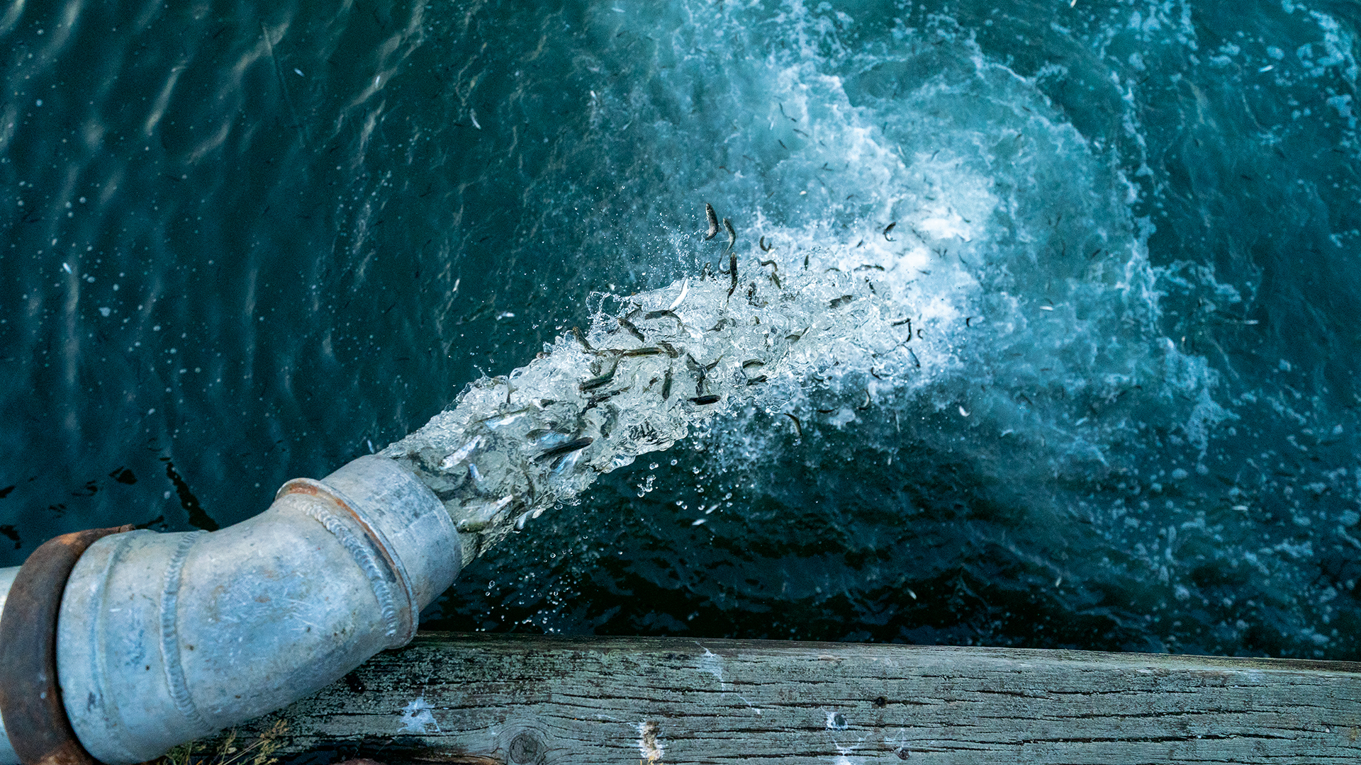 "THIS PHOTO IS TO BE USED TO PROMOTE PATAGONIA FILM ""ARTIFISHAL"" ONLY. NO third party use. 
