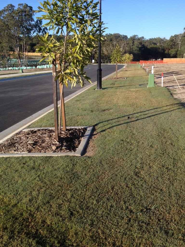 Street+tree+planting.jpeg