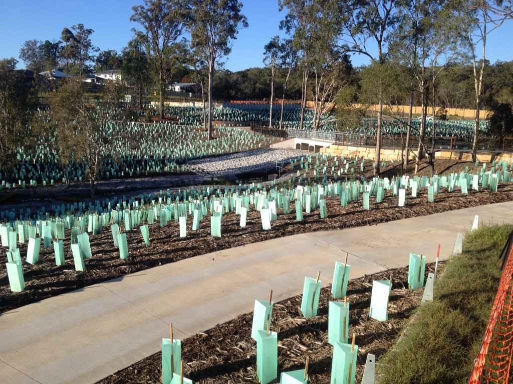 Existing vegetation with rehabilitation planting