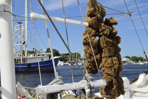 Sponges hanging on a boat.  Brucedierenfeld/Dreamstime.com