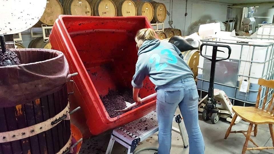 shoveling grapes.jpg
