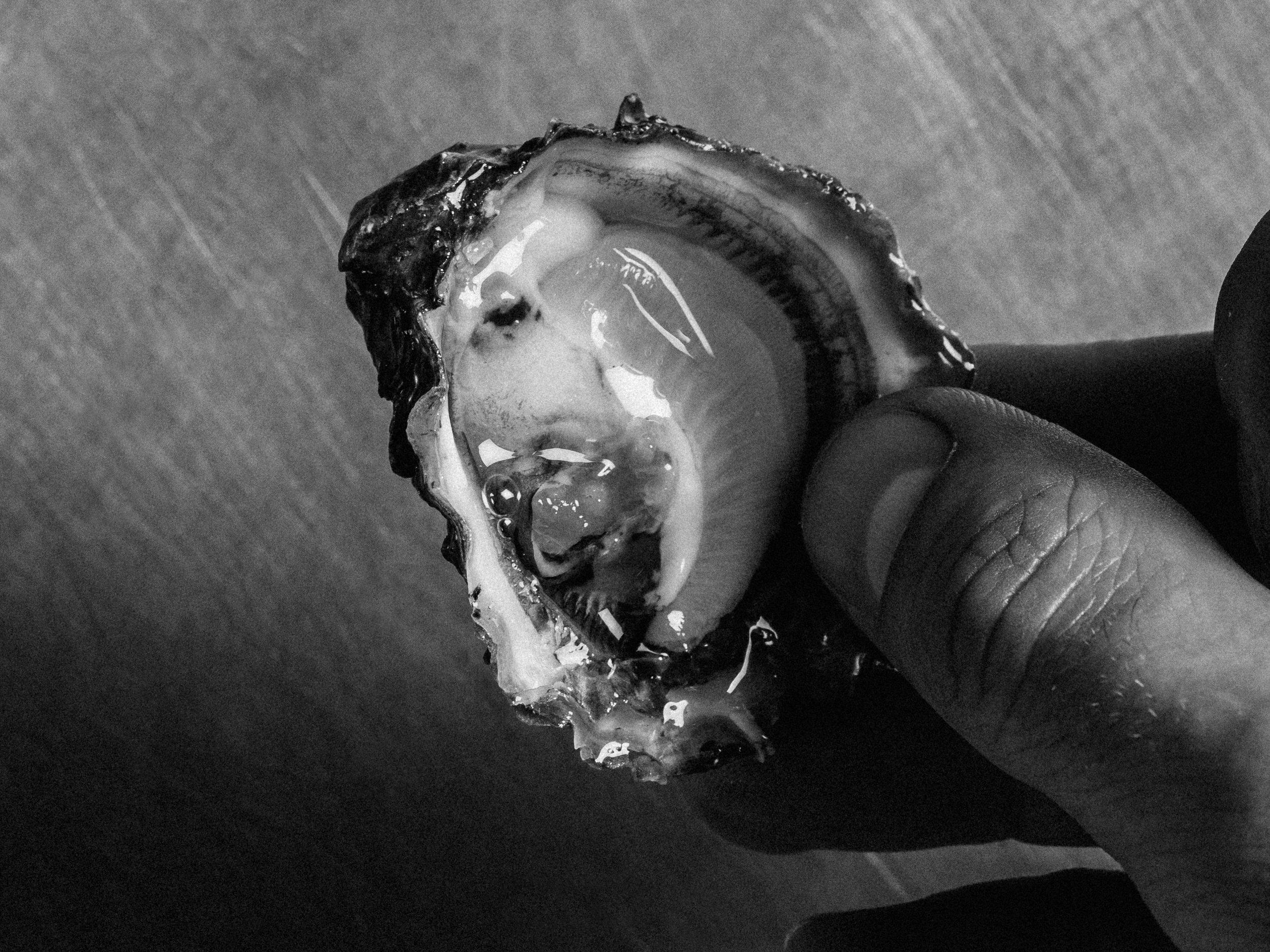 Fingers holding a shellfish.