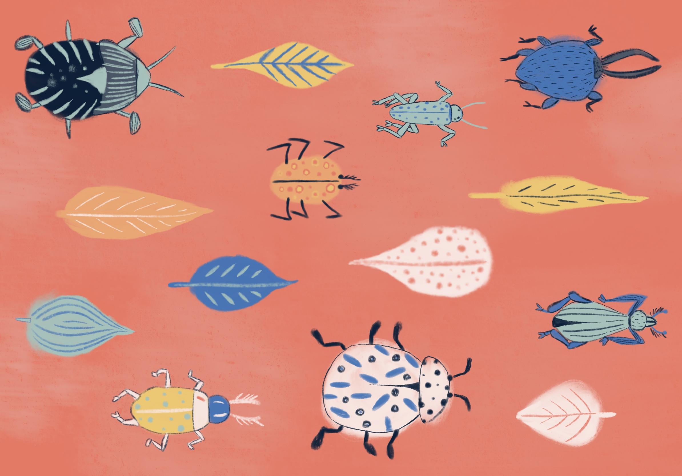 Beetles - Ages 4 years / Pre-K