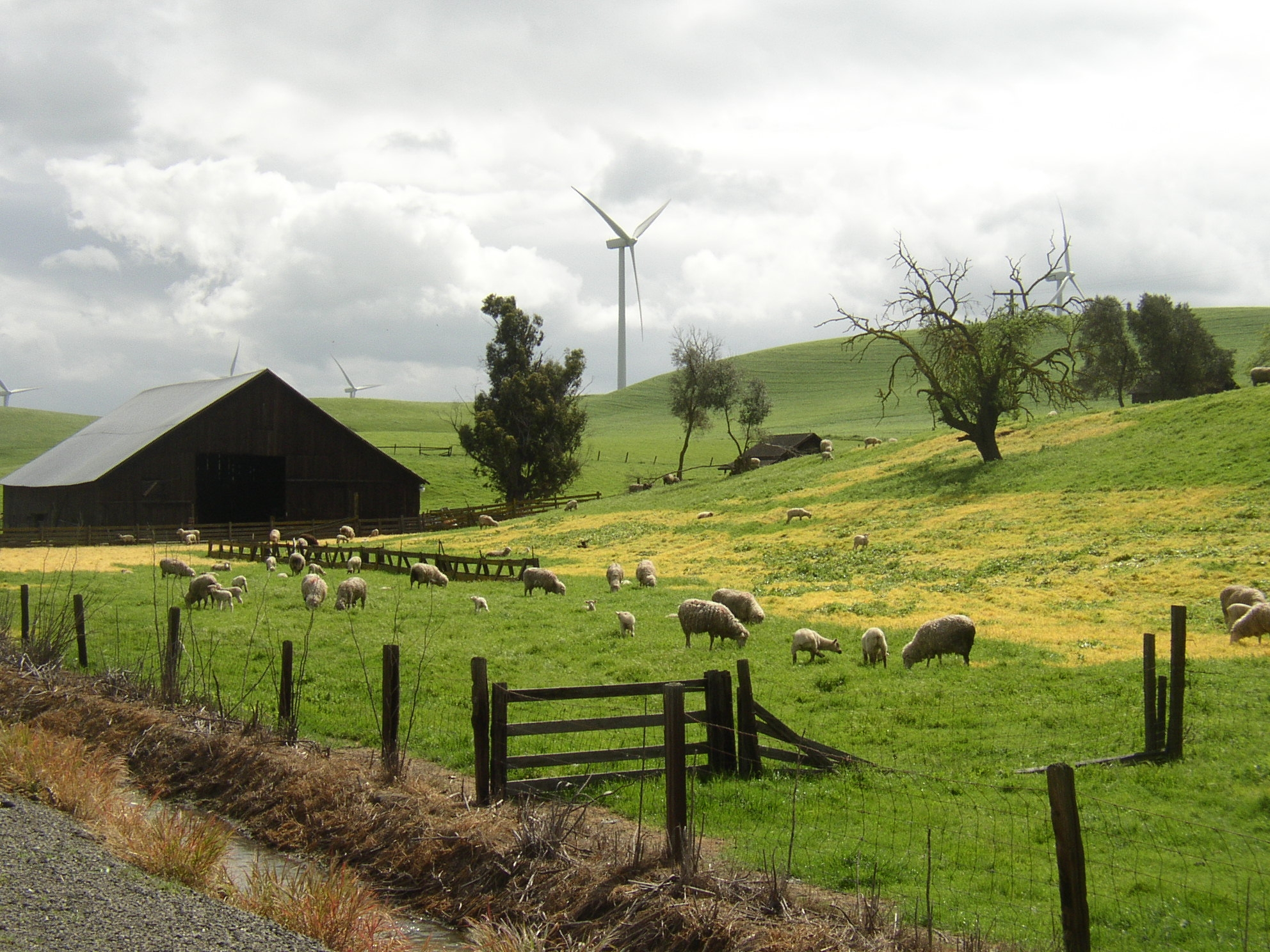 Climate Reality Project: Top Wind Energy Facts E-book -