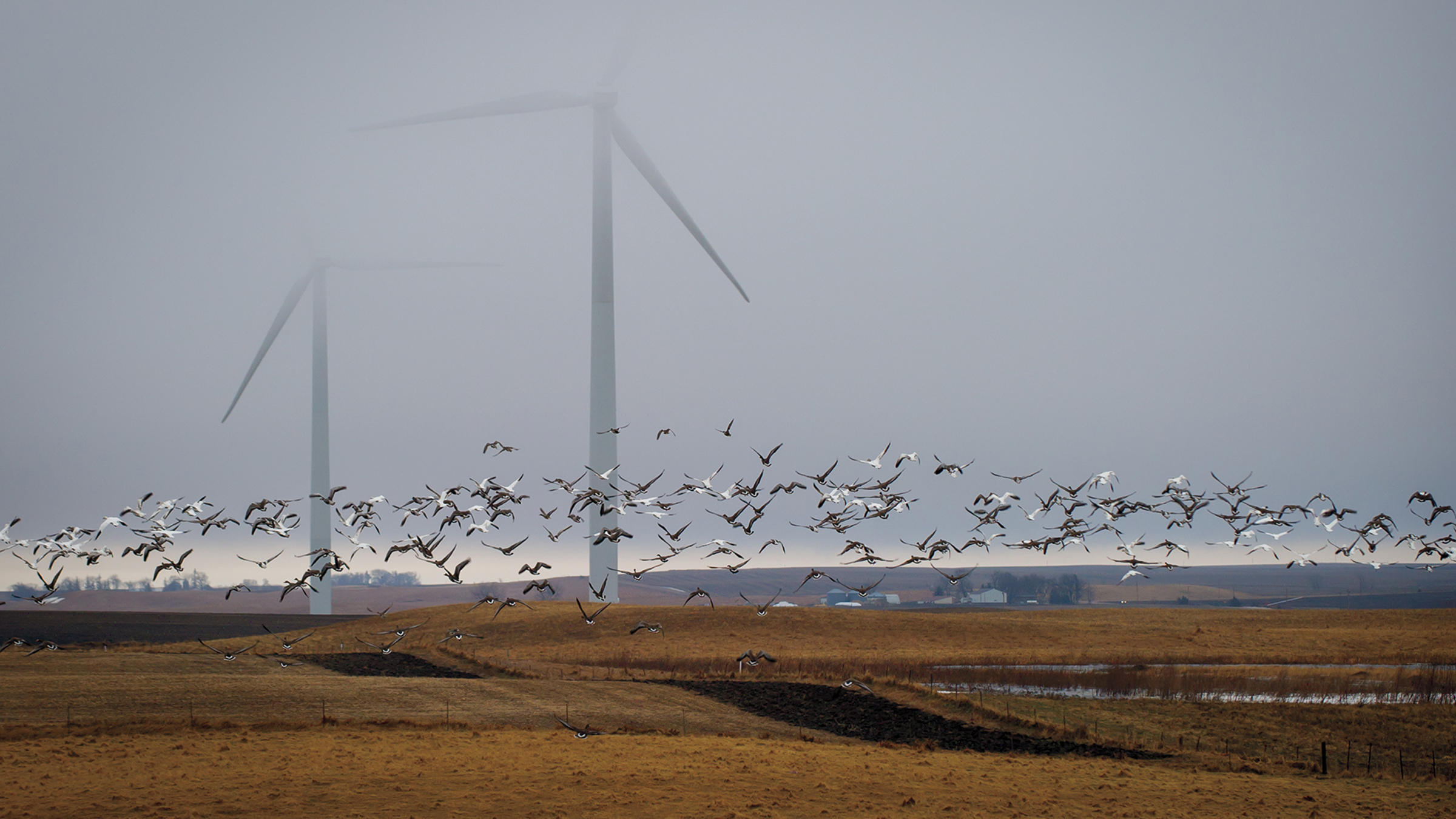 Audubon New York: Renewable Energy and Birds - Photo provided by Audubon