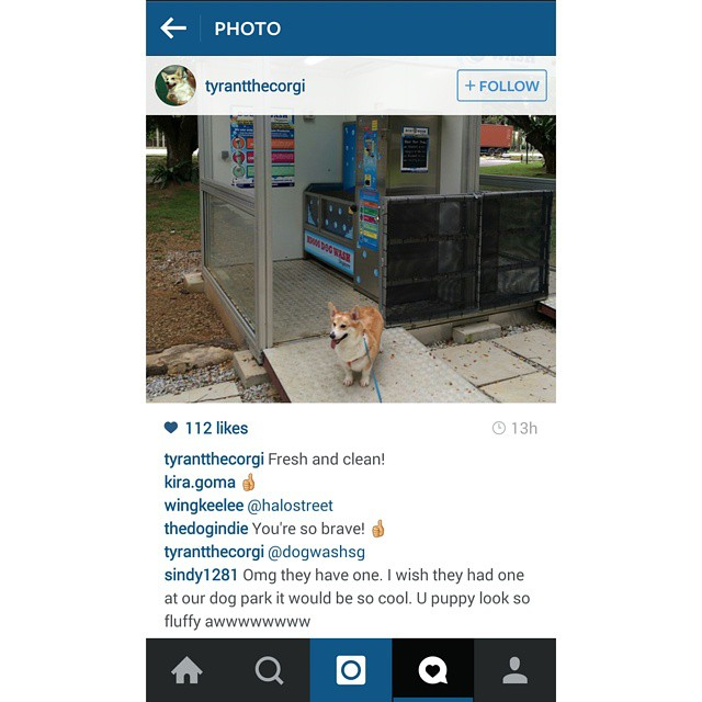 Regram @tyrantthecorgi  Great work now you have #sgcleanestdog too and so fluffy 💗💗💗