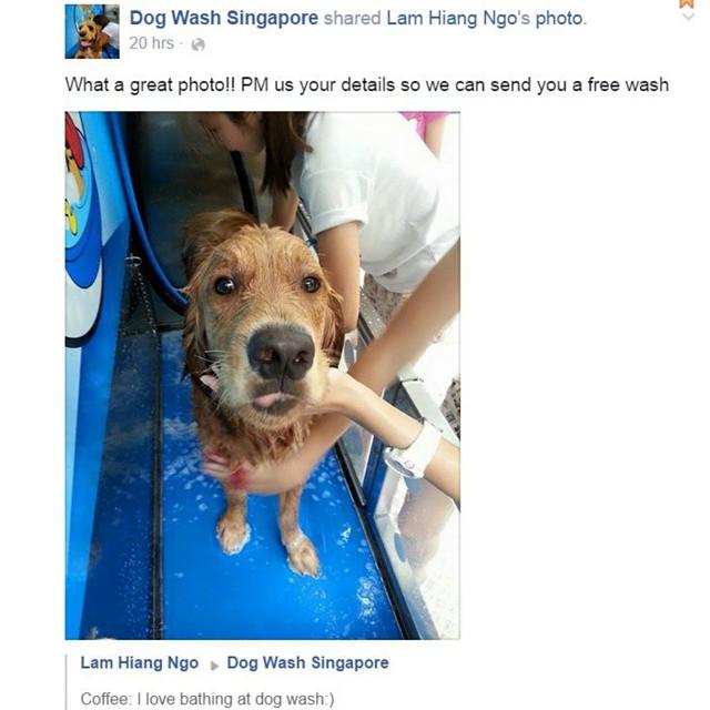 #sgcleanestdog @dogwashsg 😊 @dogsofinstasg @casper_ng @livingthatgoldenlife @k9000dogwash #dogslife #sgpups #sgpets #sgdogs