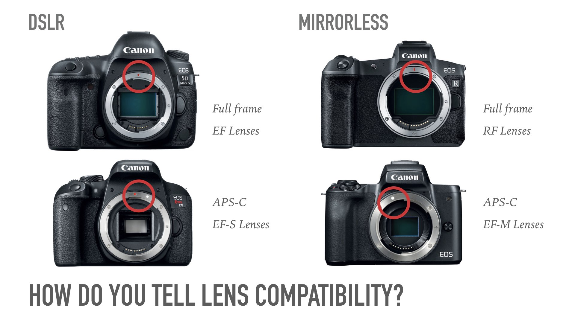 Guide to Canon Lenses.037.jpeg