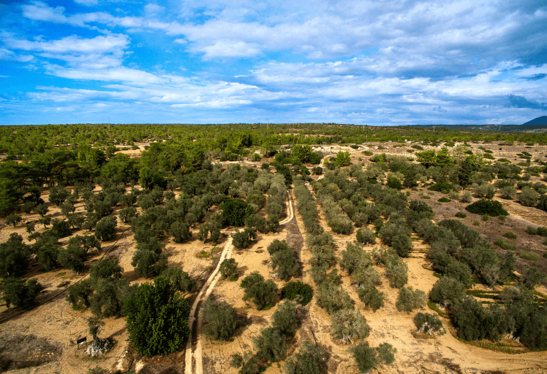 First Olives across the Line - Colives are the first olives to cross the ceasefire line in Cyprus. Read their full adventure here and find out about the details of their journey to your table.