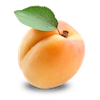 Apricot - 480x480.png