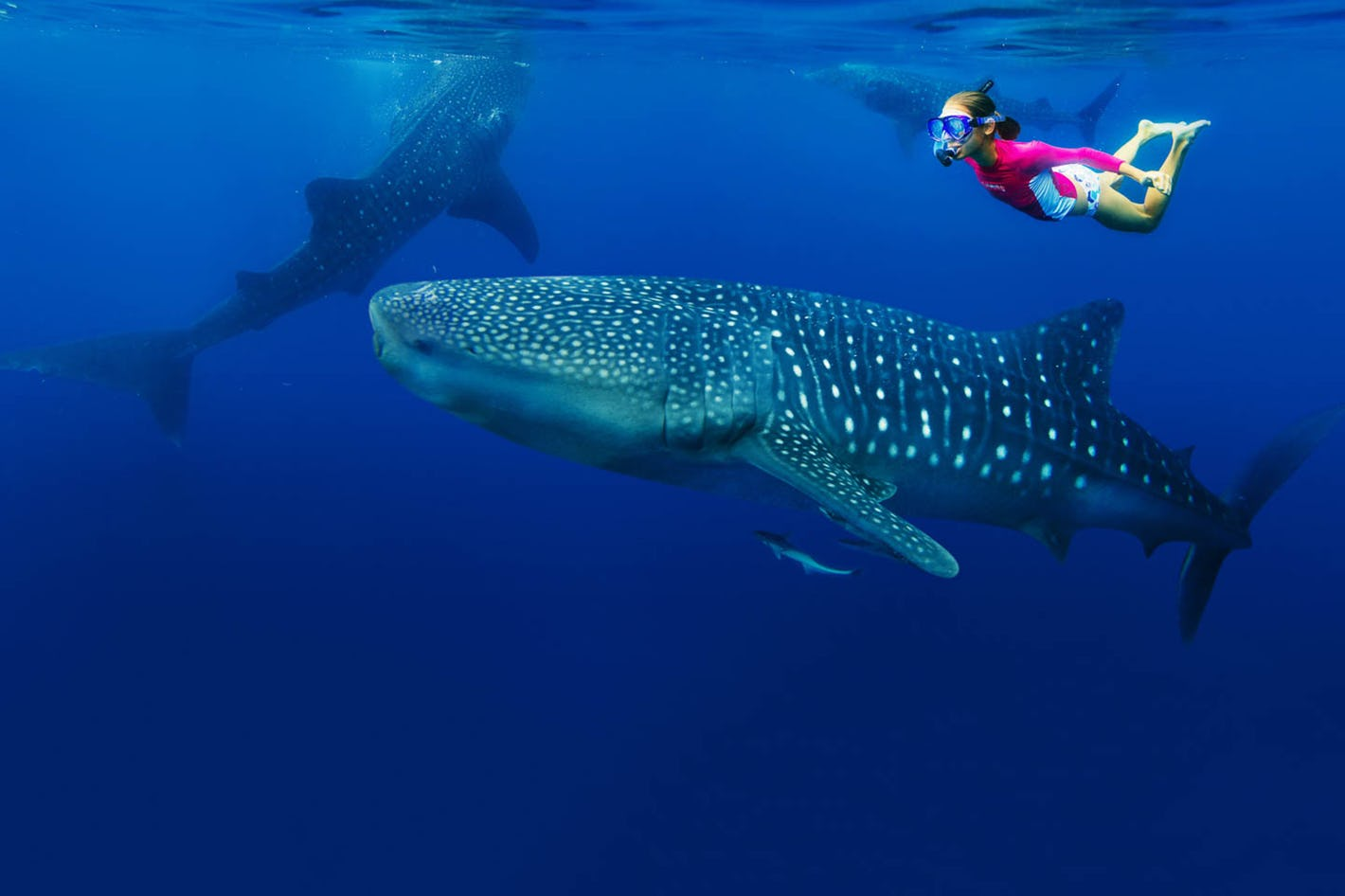 Swimming with Whale Sharks 2.jpg