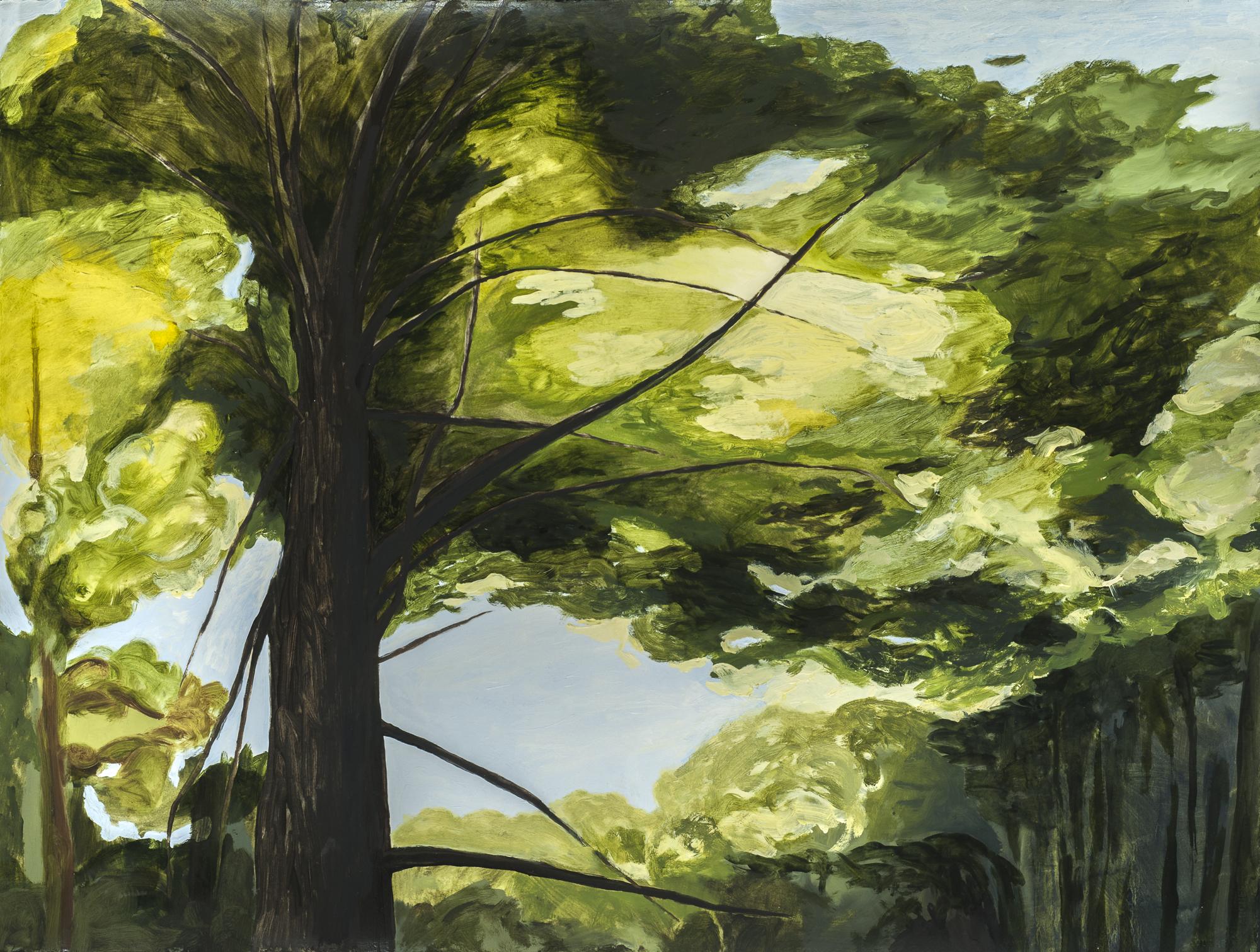 "Light in the Canopy, Muir Woods, II,  2015, O/Paper, 30"" x 22"""