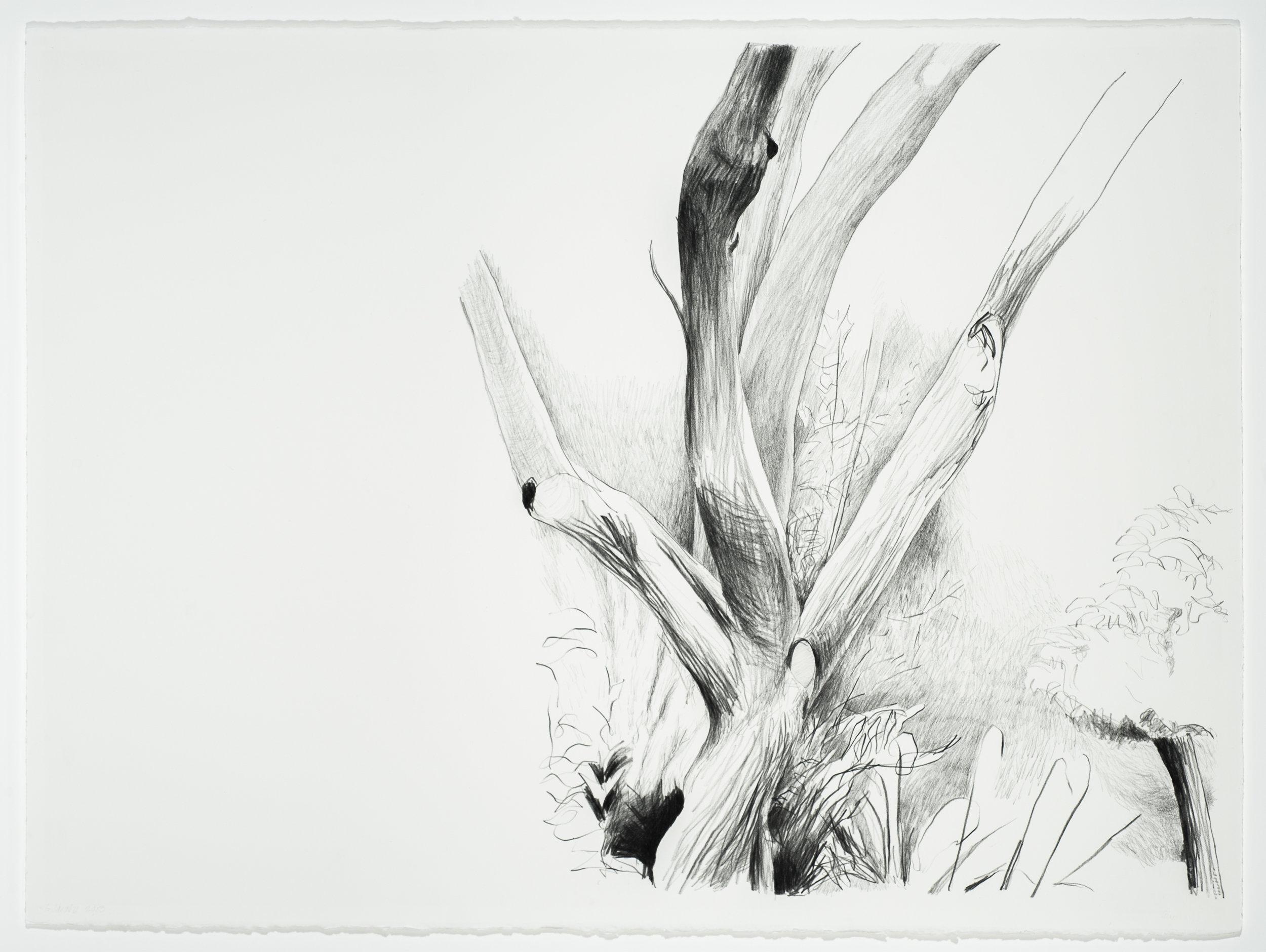 """Bare Branches,  2013, Graphite/Paper, 22"""" x 30"""""""