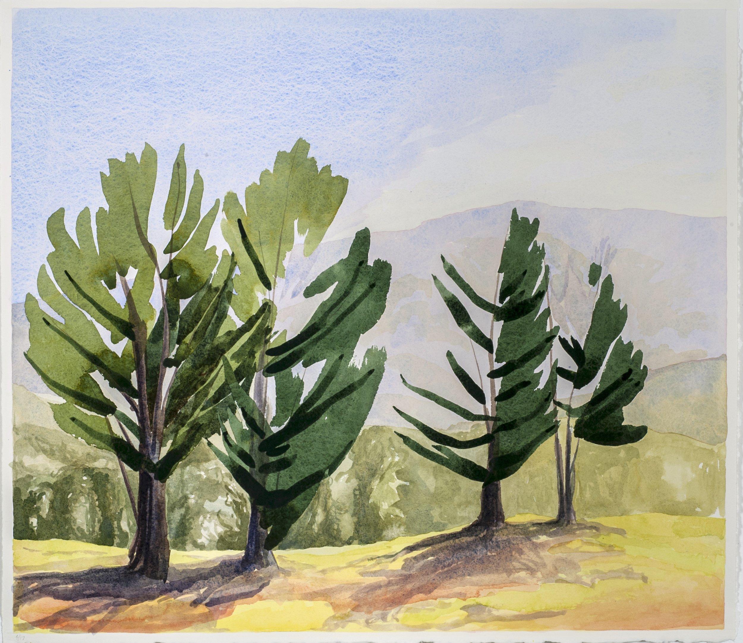 "Pine Trees on my Morning Walk , 2017, W/C, 22"" x 26"""