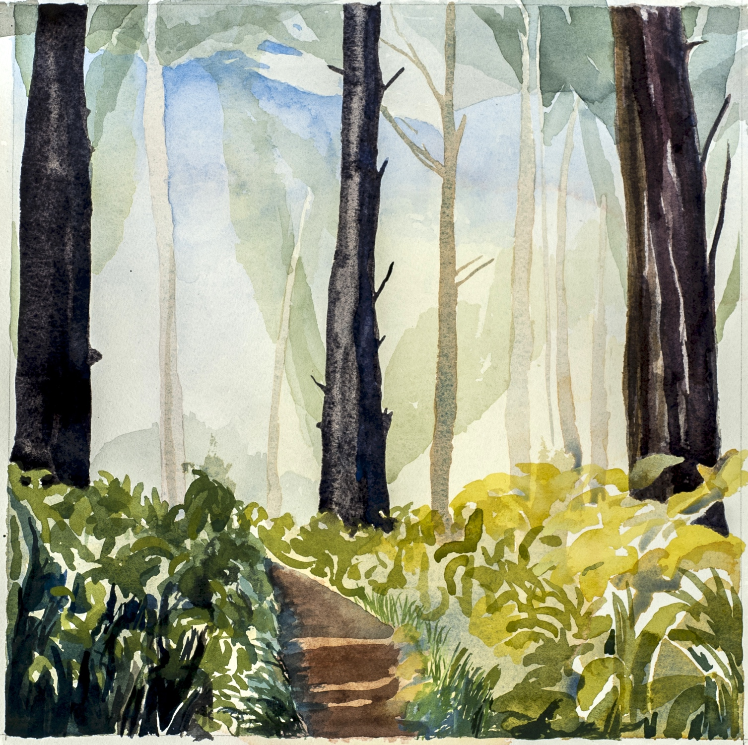 """Morning Light in the Trees, Point Reyes, I , 2016, W/C, 12"""" x 12"""""""