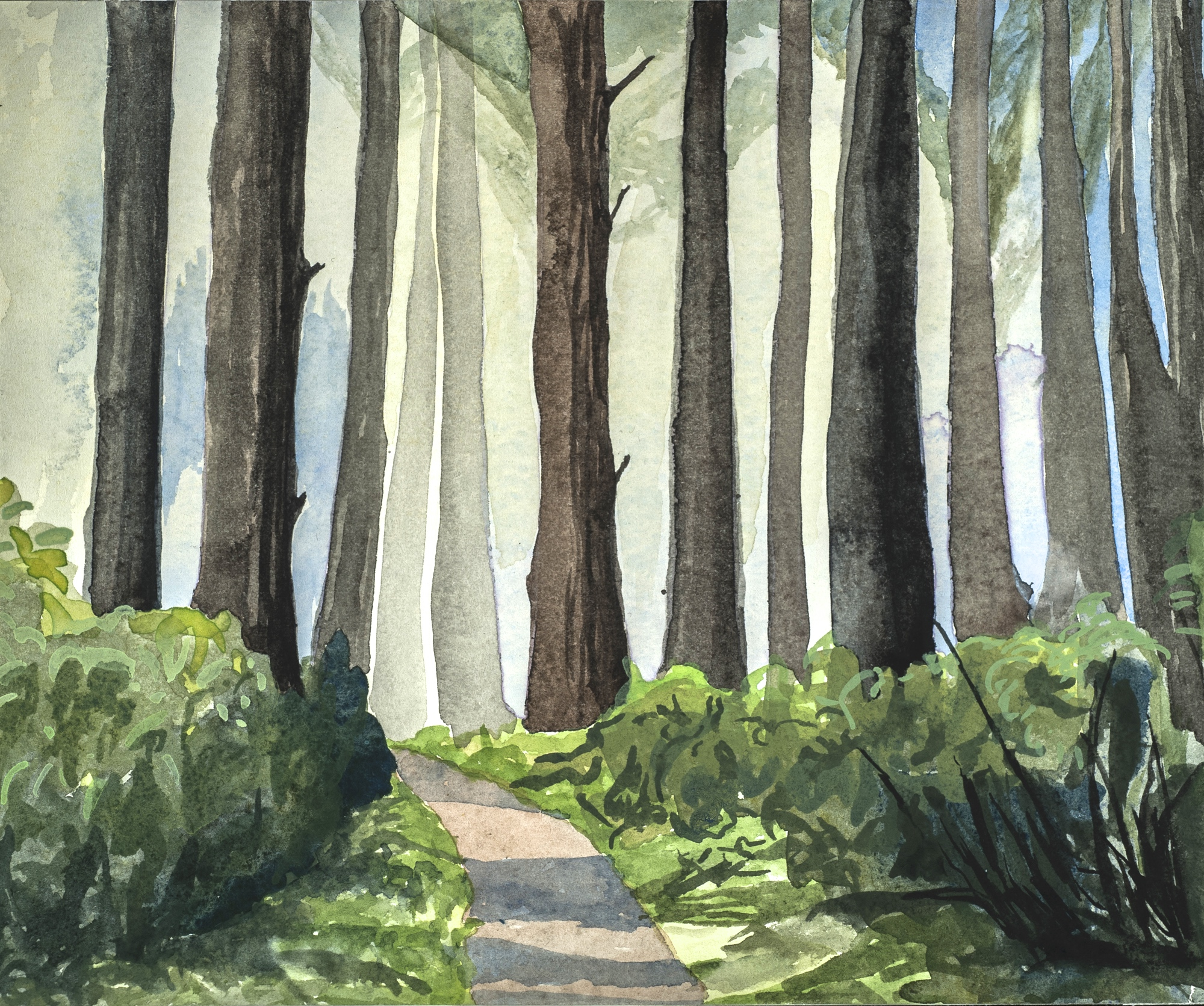 """Morning Light in the Trees , Point Reyes, III, W/C, 7"""" x 9"""""""