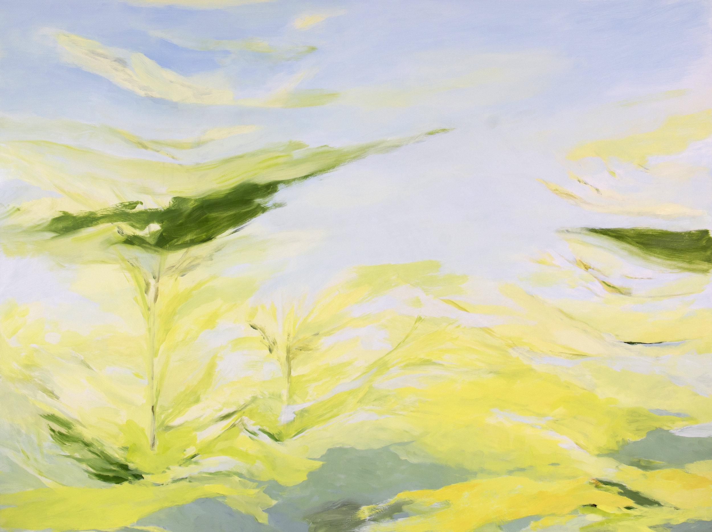 "Canopy and Sky , 2018, O/Panel, 36"" x 48"""