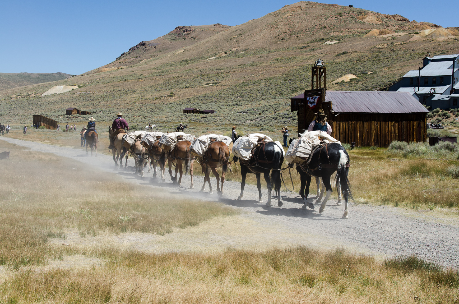 Mules at Bodie day's - CA 2016