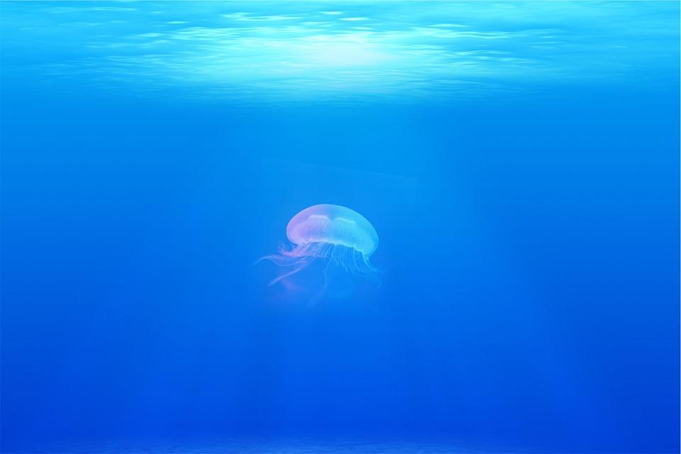 jellyfish-698521_960_720.jpg