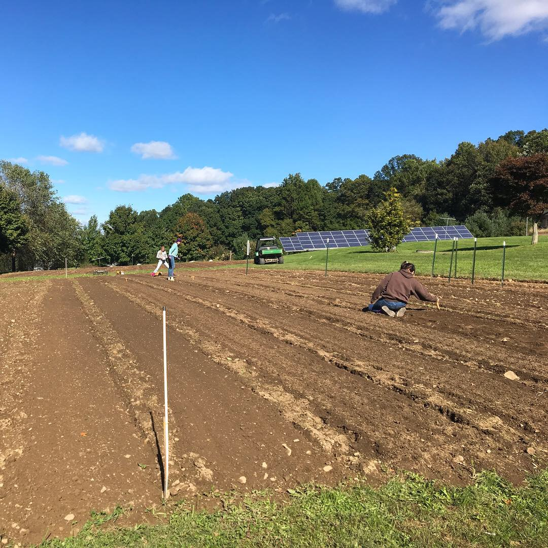 Dax Funderburk - Planting.JPG
