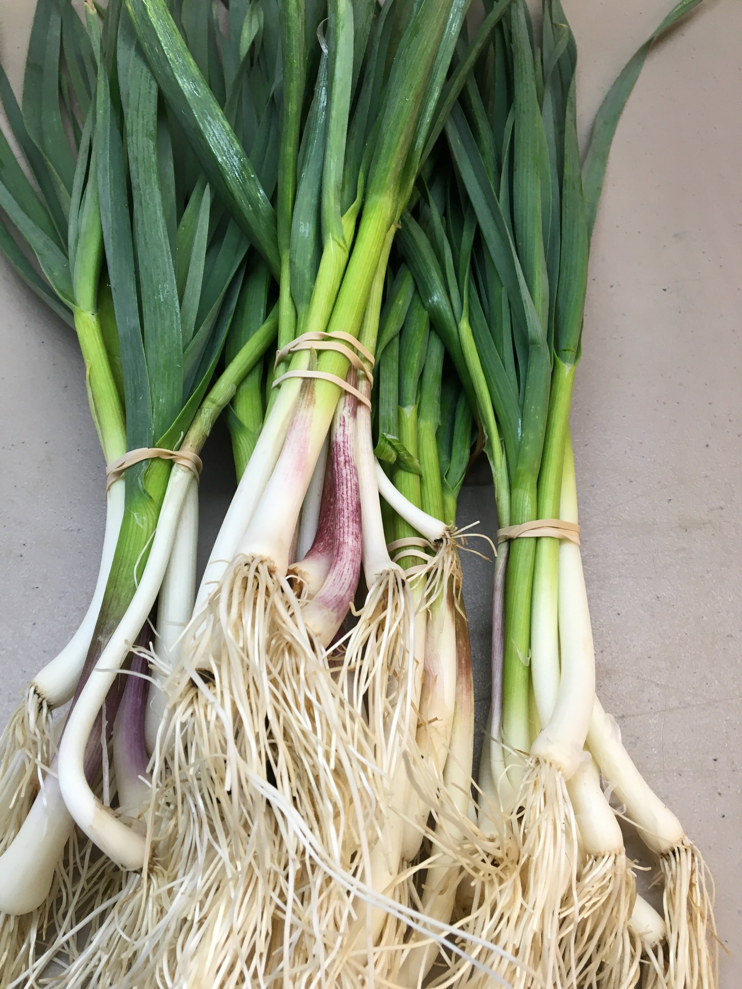 Dax Funderburk - Green garlic scalions .JPG