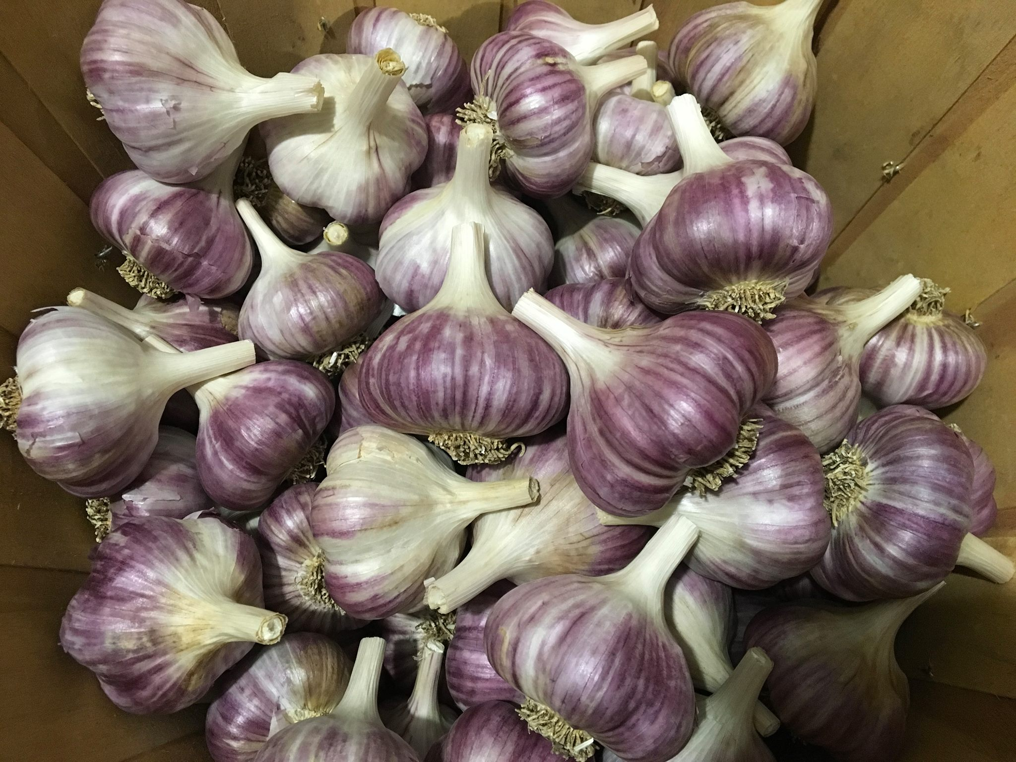 Dax Funderburk - Garlic Bulbs - Metechi .jpg