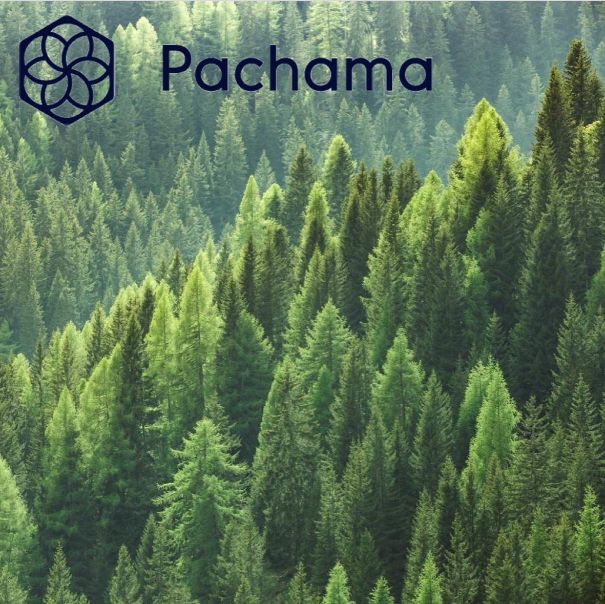 Pachama   Forest Carbon Offset marketplace