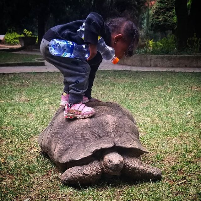 A local cathedral keeps giant tortoises on the grounds to trim the grass