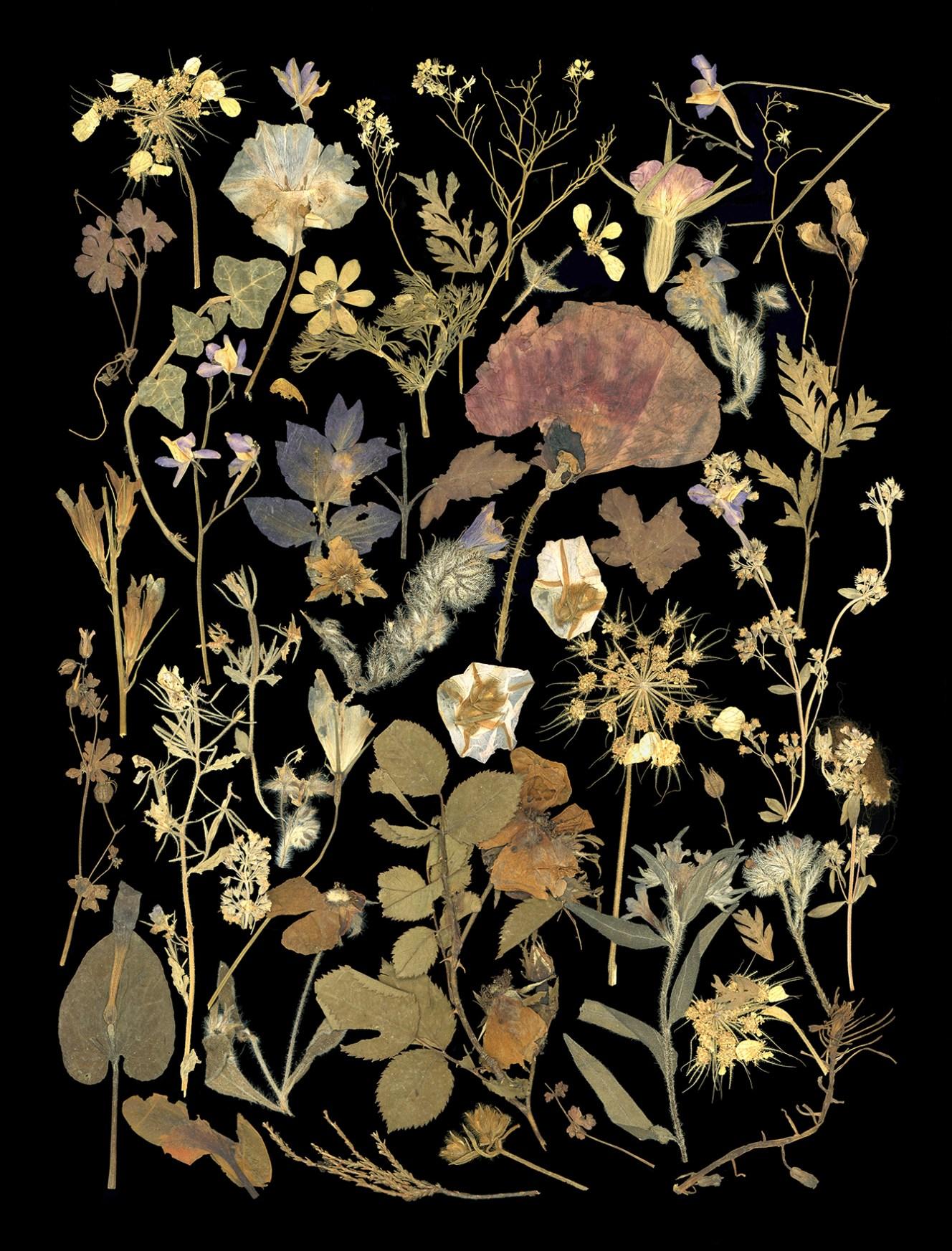 2014-017-1-George-Marr-Flowers-WWI-Black-sm.jpg