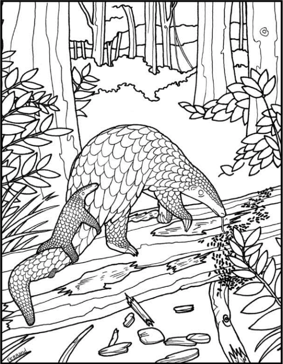 pangolin coloring page - Download, print, and color!Illustration Gregory Ferrand. © 2008 Save Pangolins