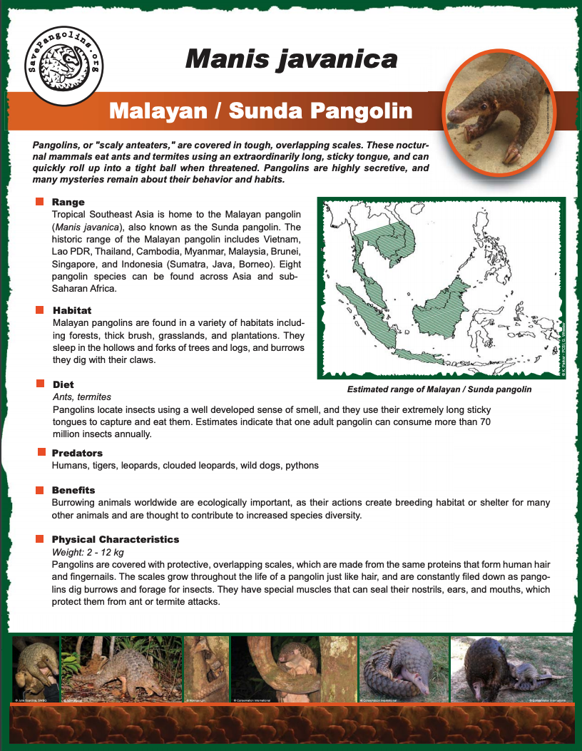 pangolin fact sheet - Download and distribute our Pangolin Fact Sheet to help spread the word about pangolins!