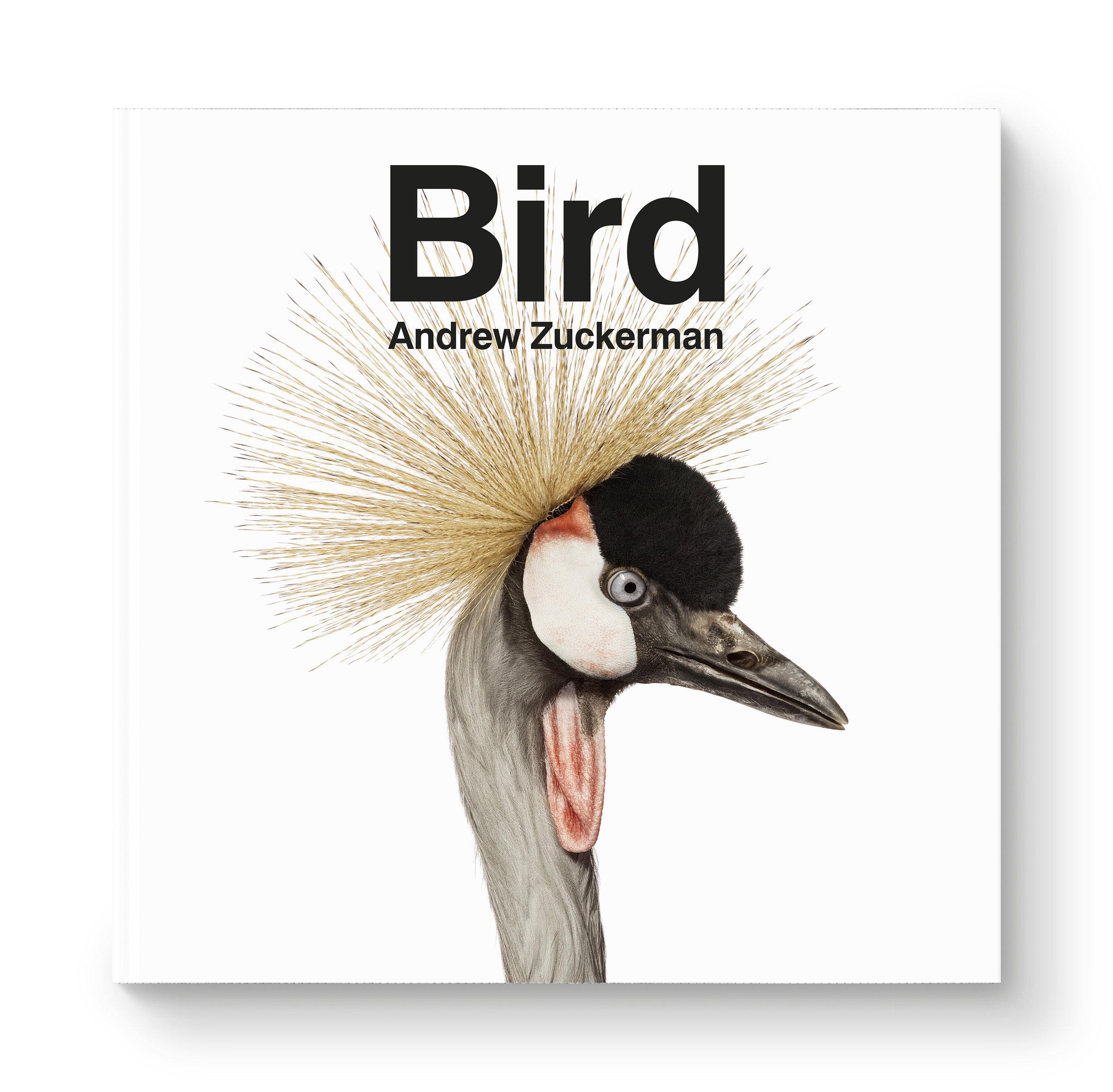 az-bird-jkt.jpg