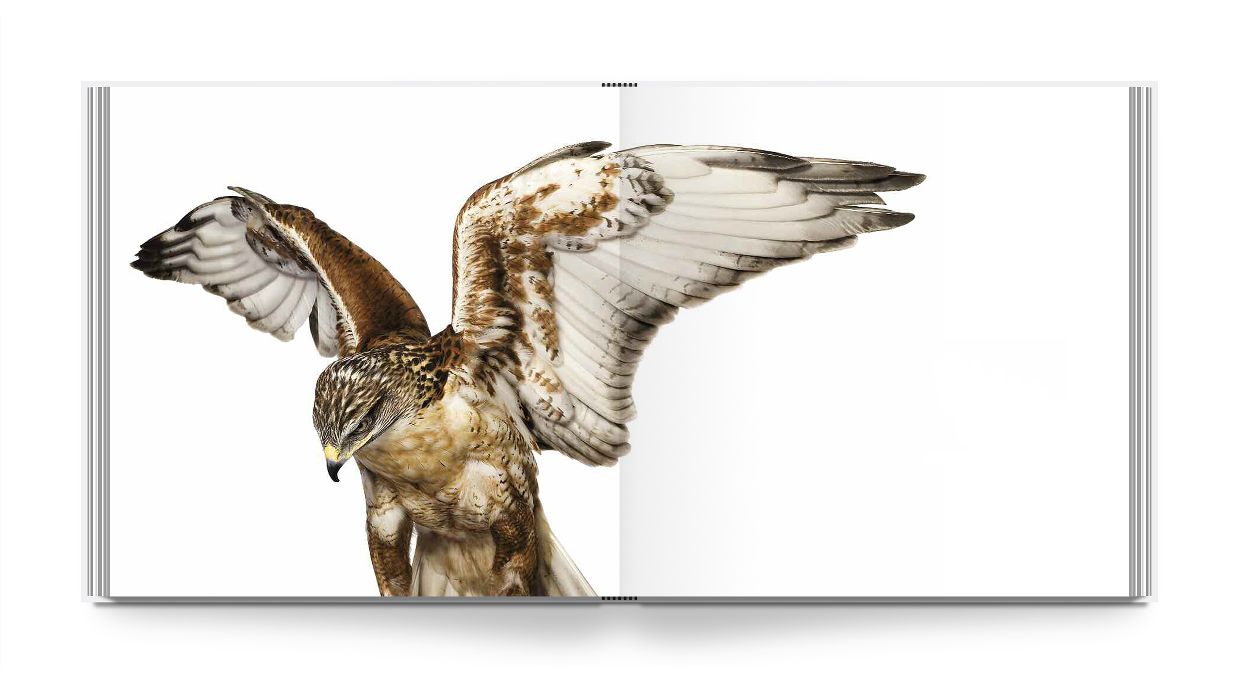 az-bird-int-2.jpg