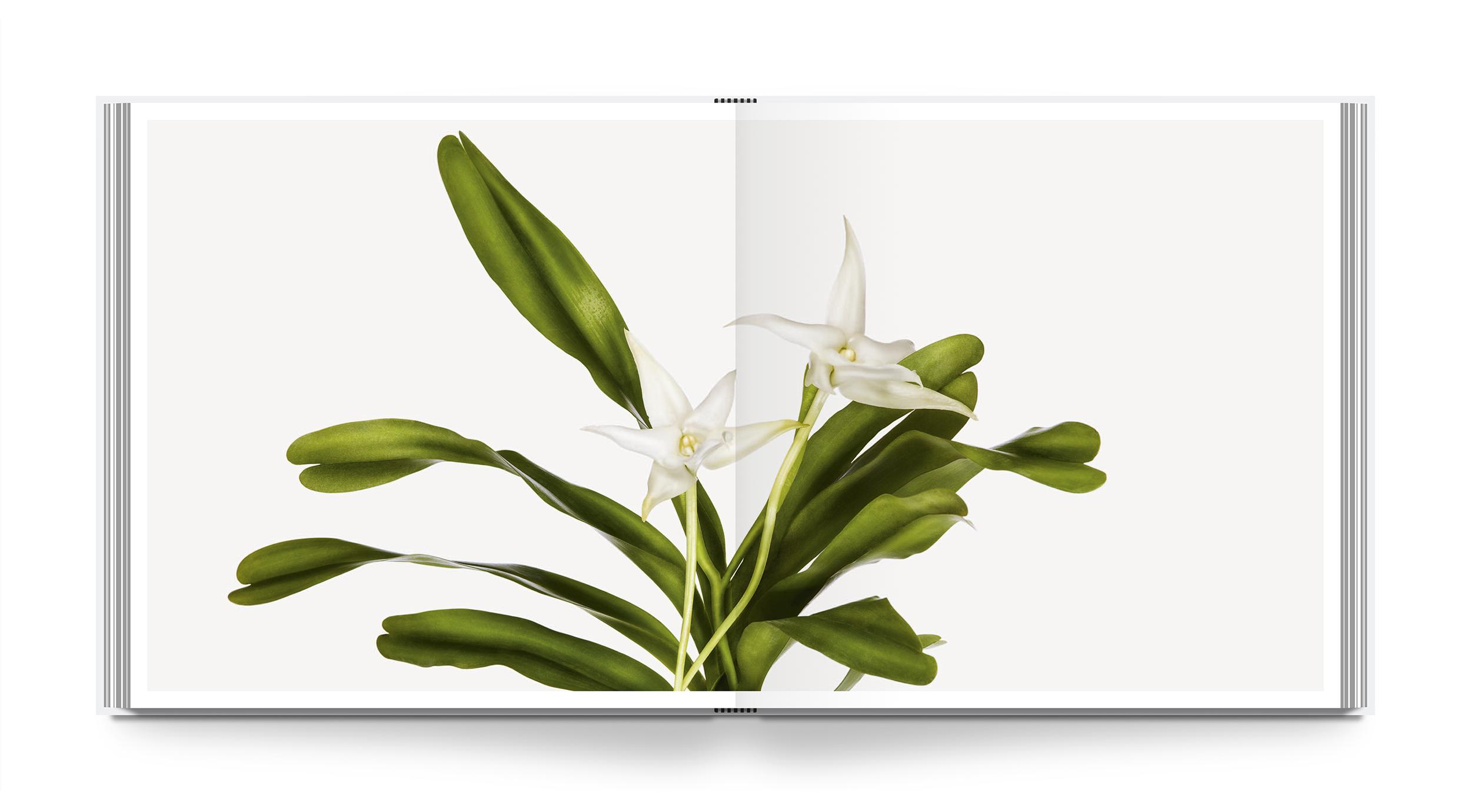 az-flower-int-1.jpg